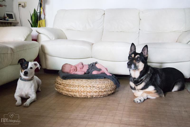 Fotografia-recien-nacido-perros