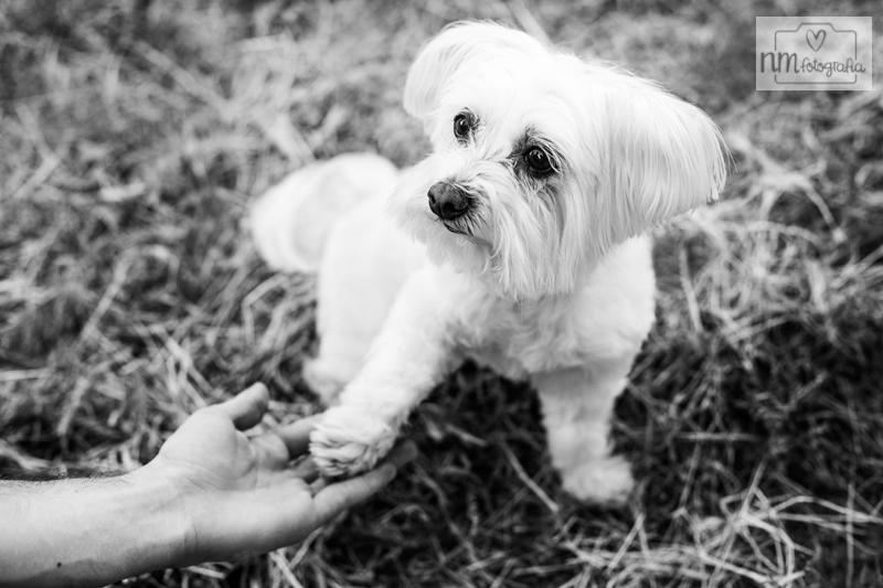 16-sesion-fotos-con-perro
