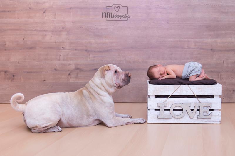 18-fotografia-newborn-con-mascota