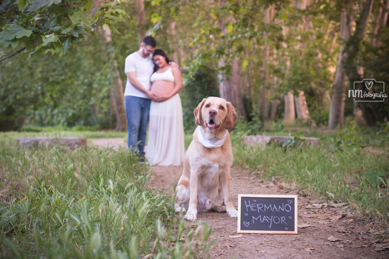 27-sesion-fotos-embarazo-perro