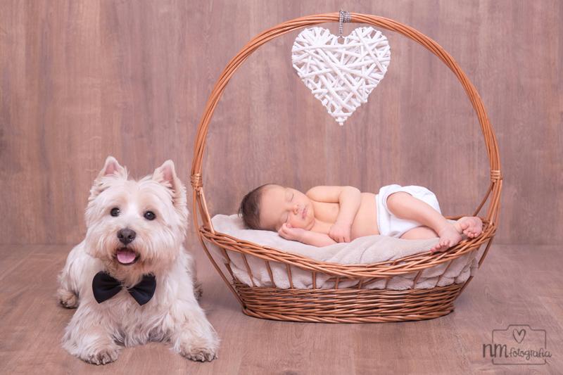29-fotografia-recien-nacidos-con-perro