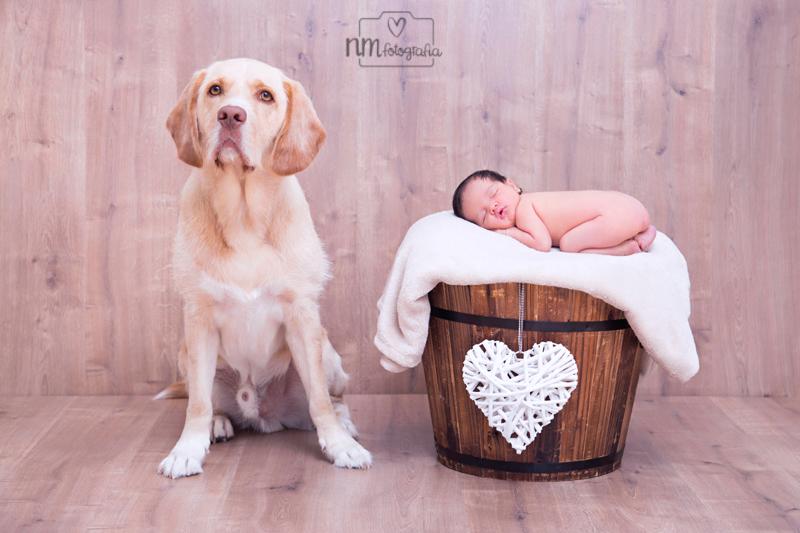 44-sesion-fotos-newborn-con-perro